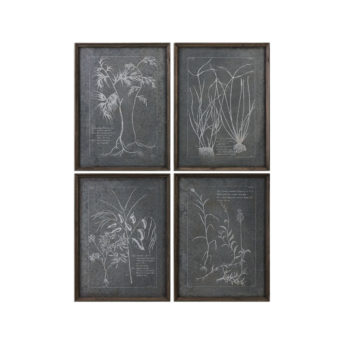 Root Study Image Wall Art 61cm ( Set of 4 )