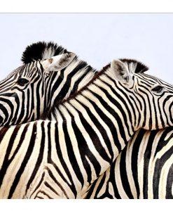 Framed Zebra Canvas Wall Art 100cm