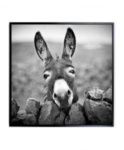 Framed Donkey Canvas Wall Art_E533126_W4CM x L100CM x H100CM