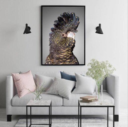 Cockatoo Framed Canvas